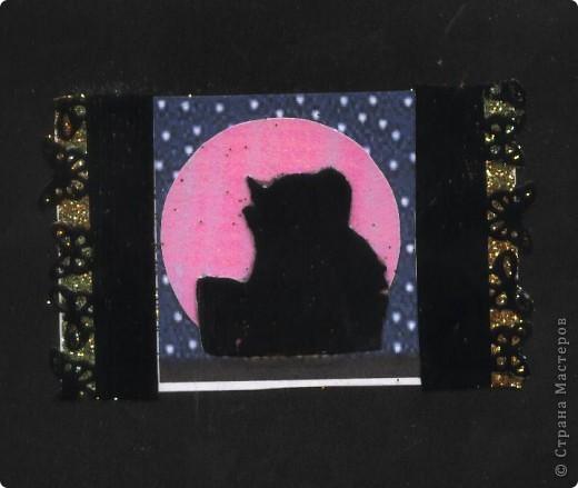 """Кошки под луной. Вы скажете """"РОЗОВАЯ""""?!? Нет, всё зависит от освещения. А вообще-то лимонно-жёлтая!!! фото 3"""