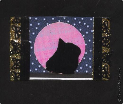 """Кошки под луной. Вы скажете """"РОЗОВАЯ""""?!? Нет, всё зависит от освещения. А вообще-то лимонно-жёлтая!!! фото 7"""