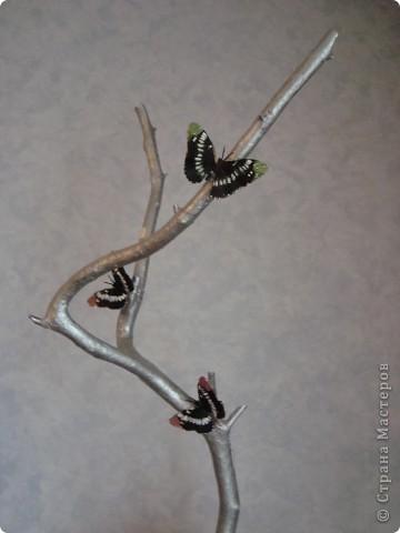 Понравилась ветка в лесу) Решили взять ее домой и задекорировать. фото 2