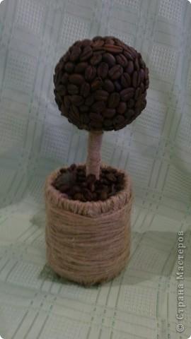 сегодня в стране нашей увидела очередное кофейное деревце и удивилась.....а почему у меня его нет?? непорядок, будем исправлять... фото 22