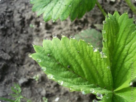 В этом году лето оказалось очень дождливым. Но у природы нет плохой погоды. И вот какое настроение навеял мне дождик. фото 2