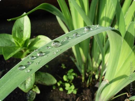 В этом году лето оказалось очень дождливым. Но у природы нет плохой погоды. И вот какое настроение навеял мне дождик. фото 12