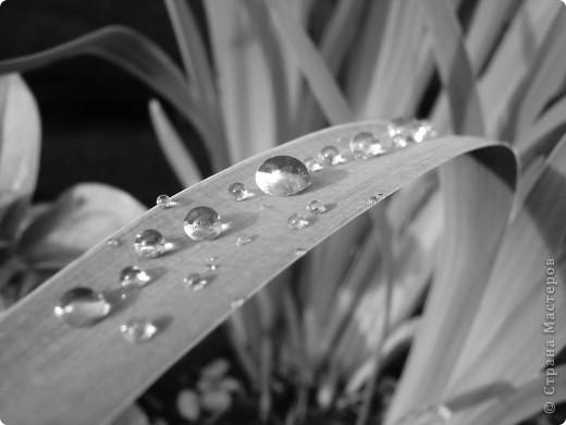 В этом году лето оказалось очень дождливым. Но у природы нет плохой погоды. И вот какое настроение навеял мне дождик. фото 1