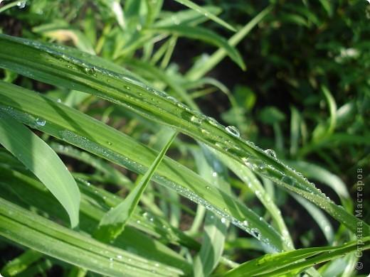 В этом году лето оказалось очень дождливым. Но у природы нет плохой погоды. И вот какое настроение навеял мне дождик. фото 5