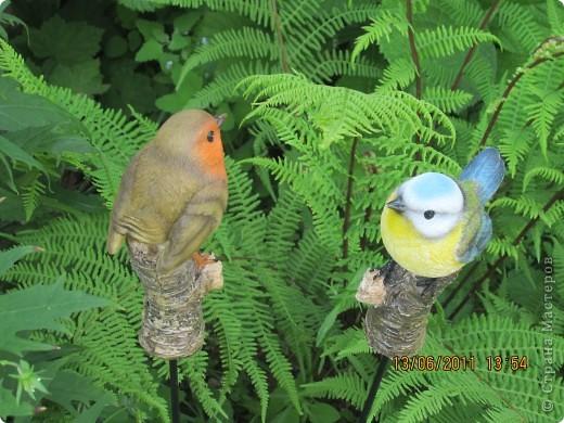 Этот арбузик - кормушка для птиц. фото 6