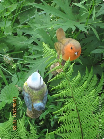 Этот арбузик - кормушка для птиц. фото 7
