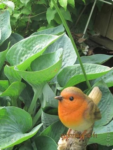 Этот арбузик - кормушка для птиц. фото 24