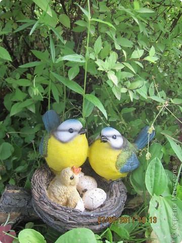 Этот арбузик - кормушка для птиц. фото 8