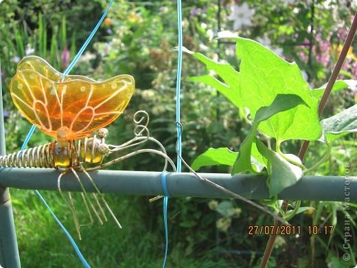 Этот арбузик - кормушка для птиц. фото 20