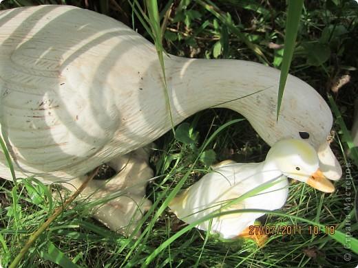 Этот арбузик - кормушка для птиц. фото 27