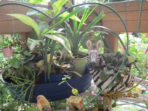 Этот арбузик - кормушка для птиц. фото 15