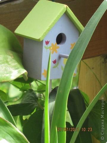 Этот арбузик - кормушка для птиц. фото 22