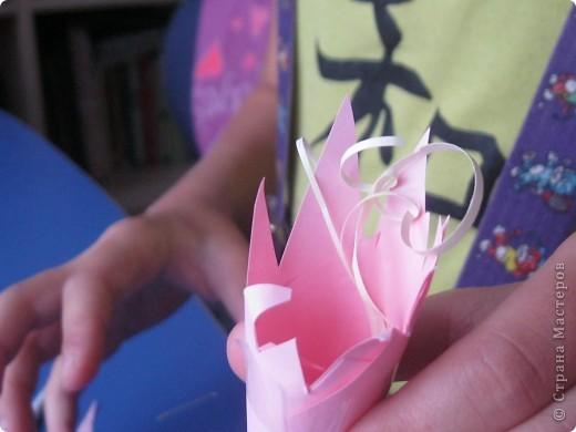 розовая лилия. фото 7