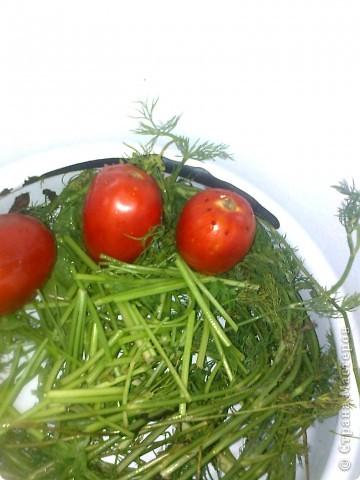 Итак моим помидорики в моем случае это сливки.Но желательно что б были круглинькие и тонкошкурые тогда быстрее процесс просаливания. фото 2