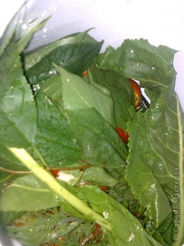 Итак моим помидорики в моем случае это сливки.Но желательно что б были круглинькие и тонкошкурые тогда быстрее процесс просаливания. фото 6
