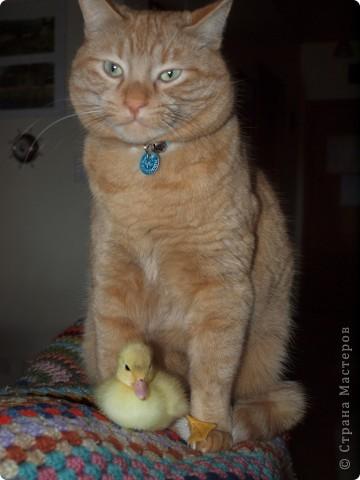 """Привет, Меня зовут """"Рыжик"""", а это мой друг Тася. фото 1"""