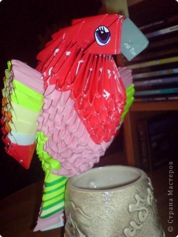 Мой попугайчик. фото 1