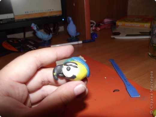 Ара попугай. фото 3
