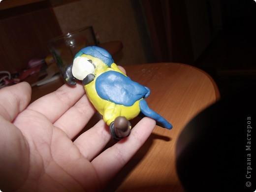 Ара попугай. фото 6