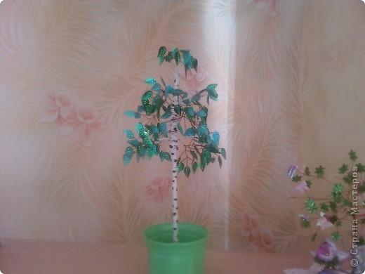 берёзка, моё первое дерево