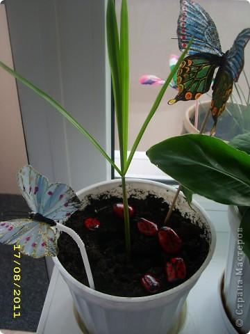 Бабочка из пластиковой бутылки, использовала витражные краски, украсила пайетками и стразиками.  фото 2