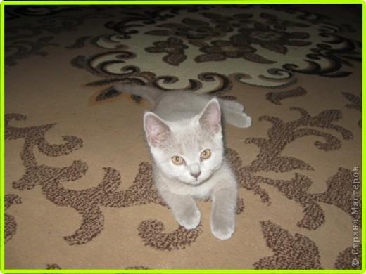 А вот и моя кошка МАСЯНЯ  фото 5