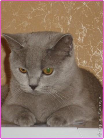 А вот и моя кошка МАСЯНЯ  фото 1
