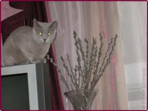 А вот и моя кошка МАСЯНЯ  фото 7