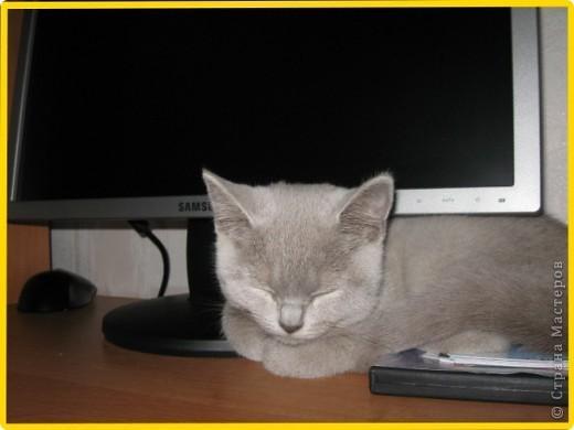 А вот и моя кошка МАСЯНЯ  фото 2