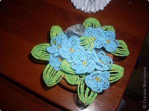фиалки голубые фото 1