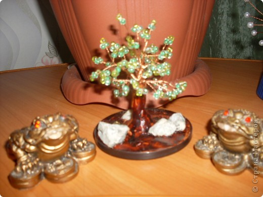 маленькое деревце фото 3