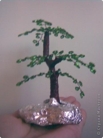 Деревья фото 4