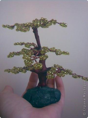 Деревья фото 10