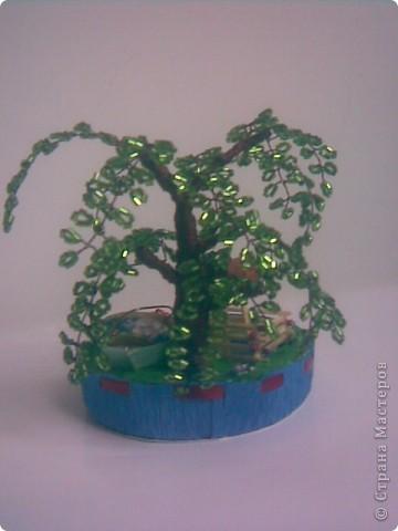 Деревья фото 15