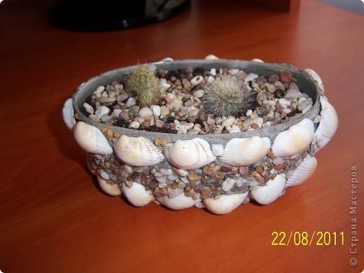 домик для маленьких кактусят