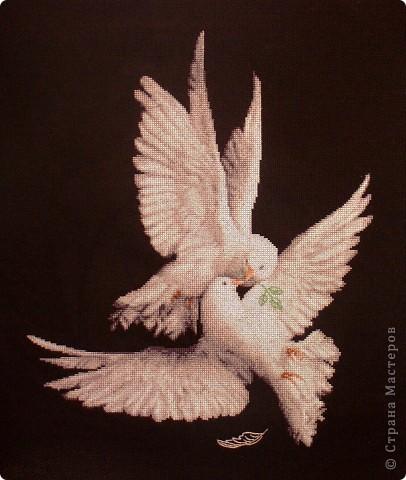 Моя голубка