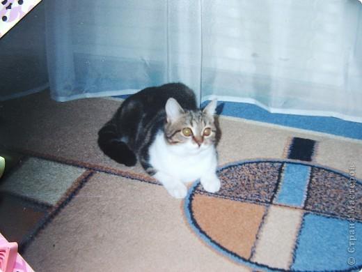 21 августа 2011 моего полосатенького комочка Фросюшки не стало...  Память о ней будет вечна и я решила сделать много разных фоторамок и развесить по всей квартире.  Вот пока первая из них...  фото 4