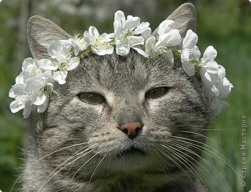 что это за прелесный цветок,так вкусно пахнет фото 5