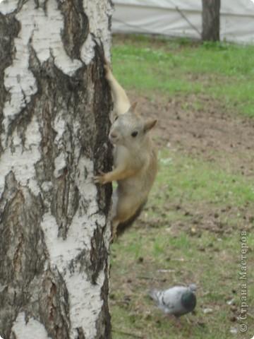 Это моя отчетная работа за лето. Красивые животные и их интересные ракурсы. Надеюсь вам понравится. фото 15