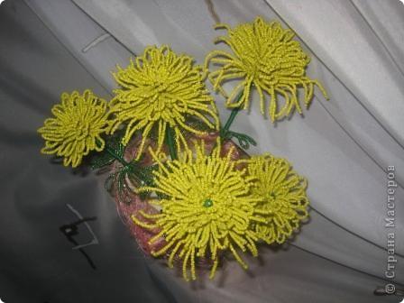 хризантемы... фото 2
