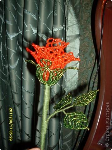пробовала новую технику плетения роз из бисера :) фото 2