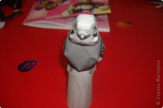 красний ара фото 5