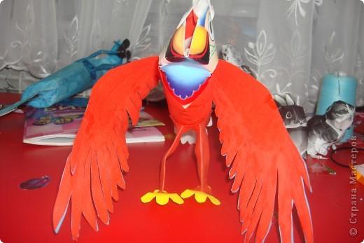 красний ара фото 2