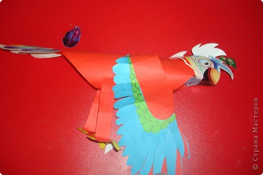 красний ара фото 1