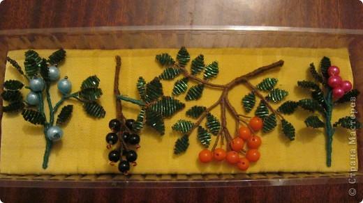 """Свои ягодки я создавала по учебнику """"Ботаника"""". фото 1"""