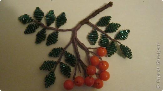 """Свои ягодки я создавала по учебнику """"Ботаника"""". фото 2"""