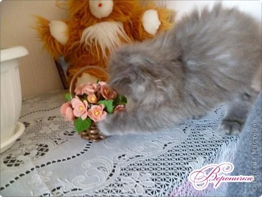 Месяц назад, у нас умерла моя любимица ангорская белая кошечка Соня. Она прожила у нас 14 лет. Я переживала, плакала, говорила, что больше не возьму котенка, не хочу потом так страдать. Но вот прошло немного времени, и я все таки решила взять маленькую кошечку, ну не могу я без этих пушистиков. Вот наша кошечка, назвали мы ее Мусичка.  фото 7