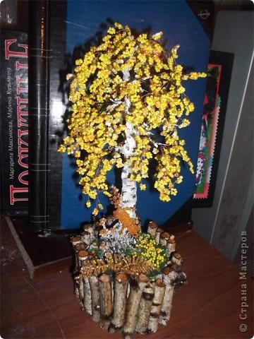 Осенняя березка фото 1