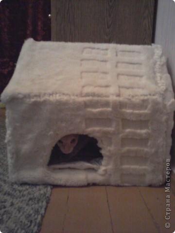 Мой лысый котик Брюс сильно мерзнет....особенно зимой! фото 1