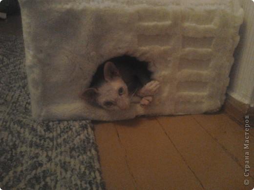Мой лысый котик Брюс сильно мерзнет....особенно зимой! фото 3